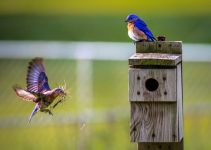 Un oiseau retourne au nid
