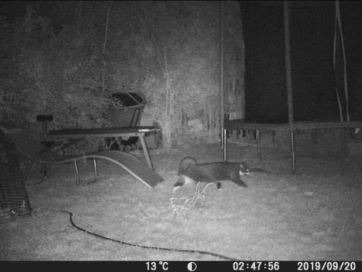 Photo d'un chat de nuit avec le piège photographique Victure HC 300