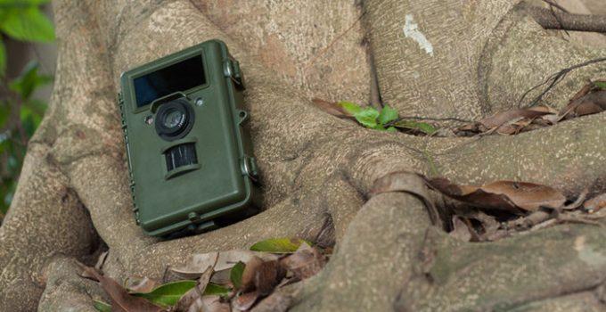Piège photographique posé sur un arbre