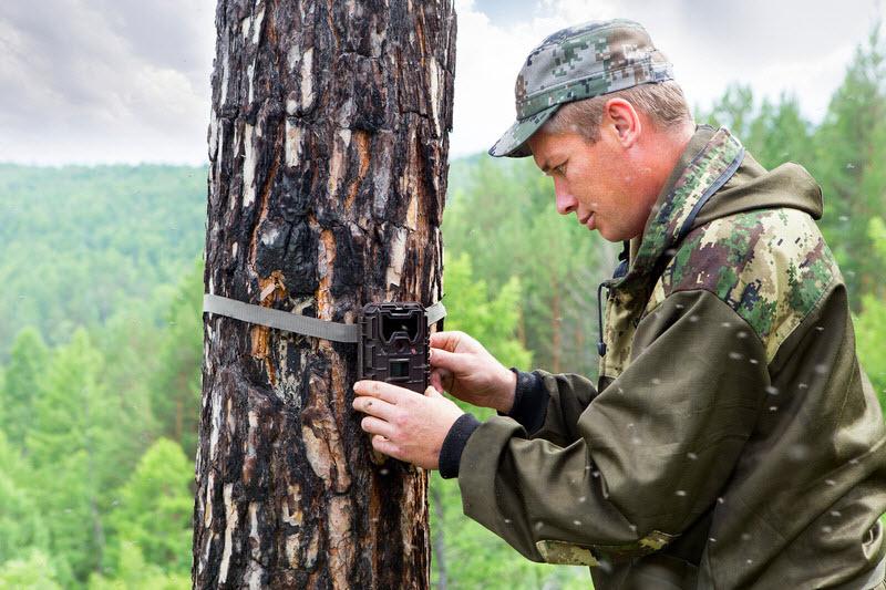 Placement d'un piège photographique sur un arbre