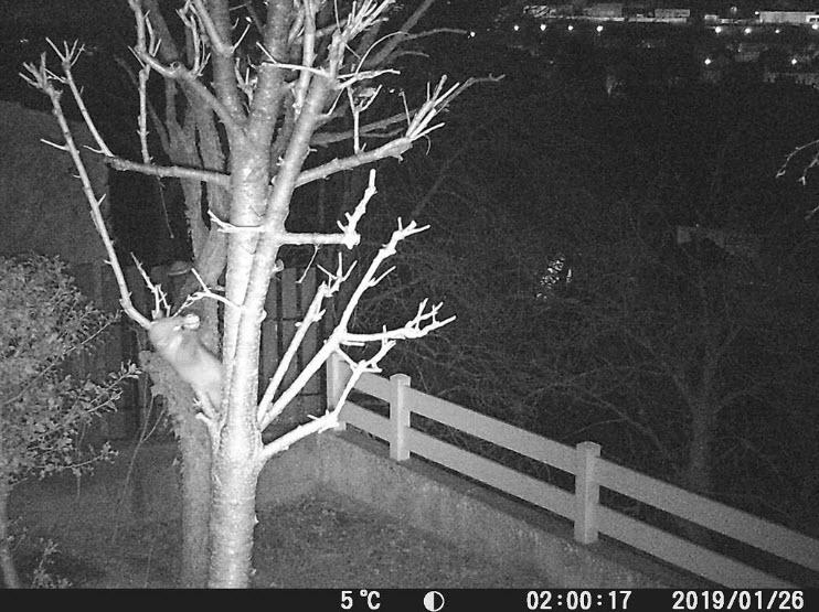 Surveillance de nuit avec une caméra de chasse