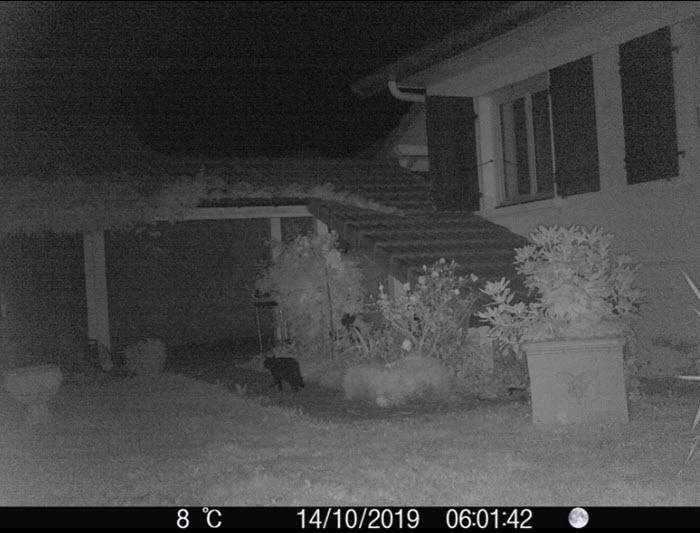 Surveillance d'une maison de nuit avec un piège photographique